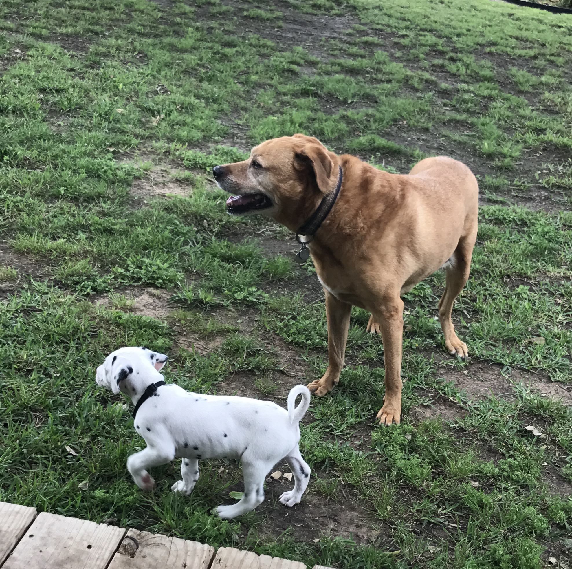 baxter & puppy